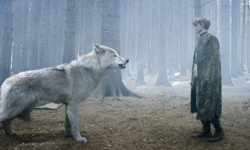 largest wolf